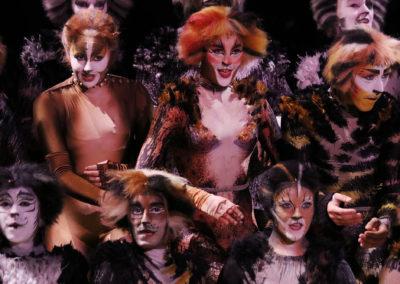Broadway-Cats